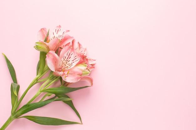 Fleur Alstroemeria Sur Un Rose Photo Premium