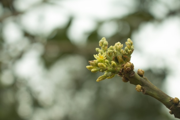 Fleur D Avocat Sur Plante Telecharger Des Photos Premium