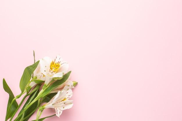 Fleur Blanche Alstroemeria Sur Un Rose Photo Premium