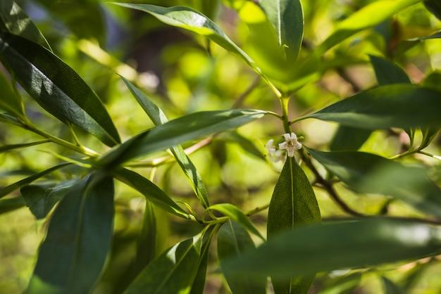 Fleur blanche sur les feuilles des arbres en toile de fond Photo gratuit