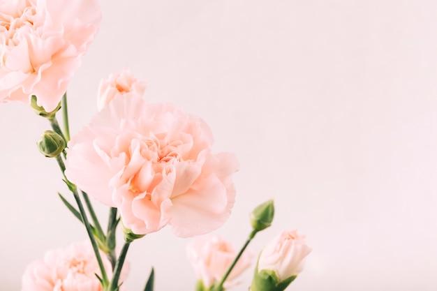 Fleur et bourgeon sur fond uni Photo gratuit