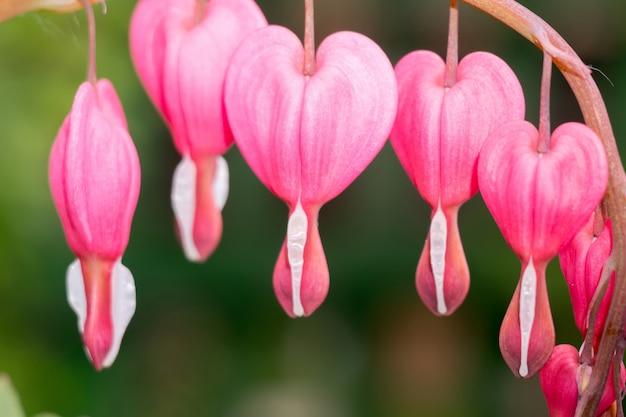 Fleur de cœur saignant Photo Premium
