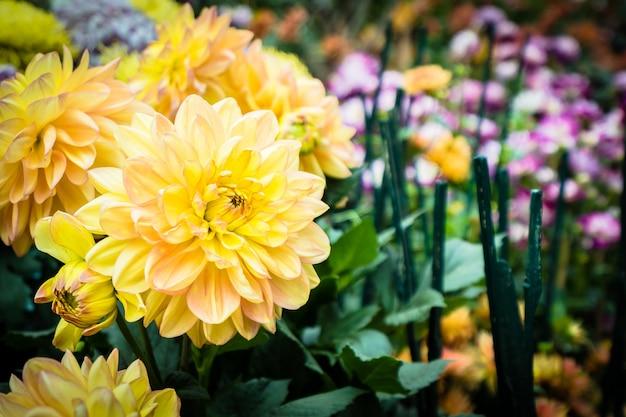 Fleur Colorée Dans Le Jardin Photo gratuit