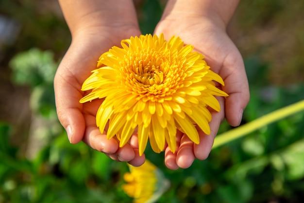 Fleur de cosmos rose belle sur place avec fond de jardin vert Photo Premium