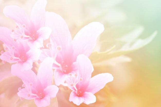 Fleur de couleur douce et pastel, photo de mise au point douce et floue dans un style vintage Photo Premium