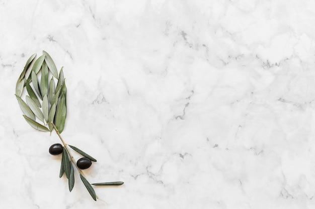 Fleur faite avec de l'olive et des feuilles sur fond de marbre blanc Photo gratuit