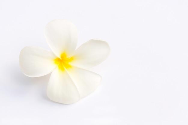 Fleur de frangipanier blanc (plumeria) isolé Photo Premium