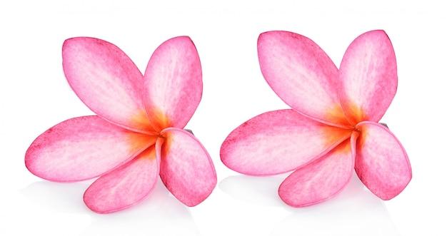 Fleur de frangipanier isolé sur fond blanc Photo Premium