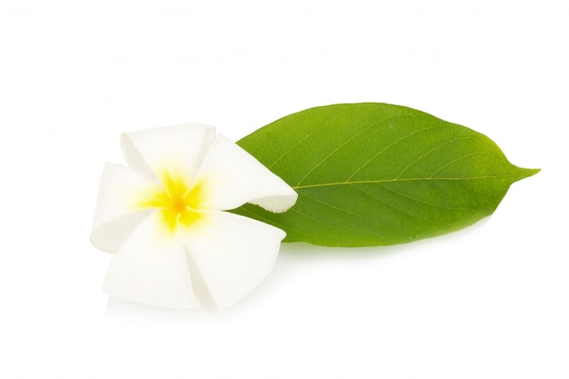 Fleur de frangipanier. plumeria. isolé sur fond blanc Photo Premium