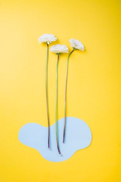 Fleur De Gerbera Blanche Avec Du Papier Decoupe Bleu Sur Fond Jaune