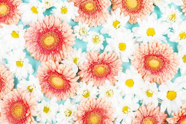 Fleur De Gerbera Rose Avec Fond De Fleurs Blanches Telecharger Des