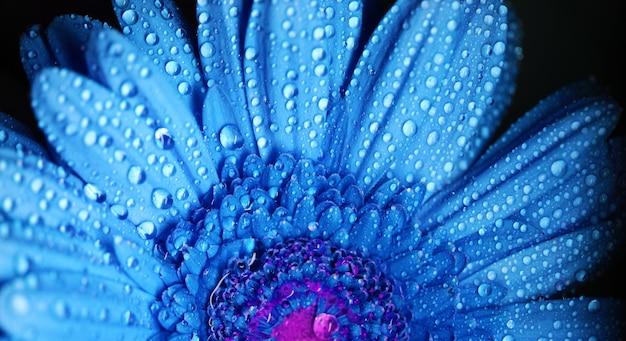 Fleur de gerbera se bouchent photo macro Photo Premium