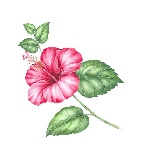 Fleur d'hibiscus rouge. Photo Premium