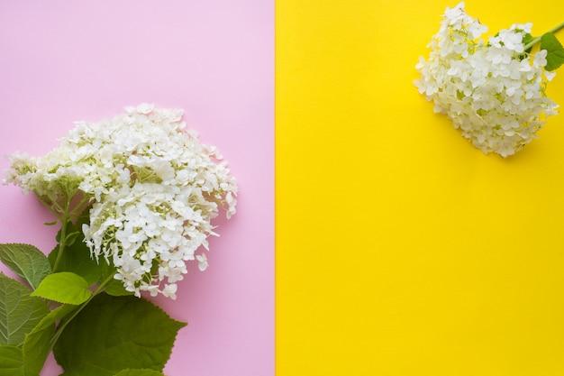Fleur d'hortensia blanc sur fond jaune et rose. concept d'été .. Photo Premium