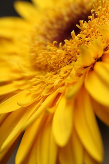 Fleur jaune close up Photo gratuit