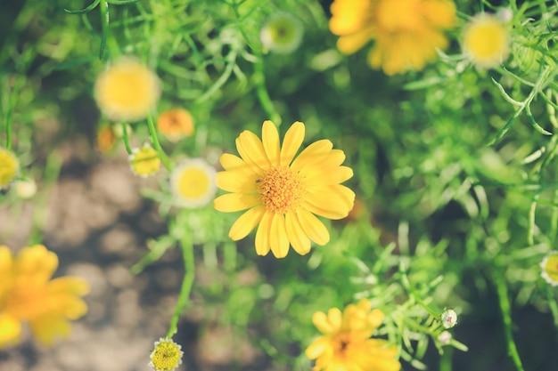Fleur jaune Photo gratuit