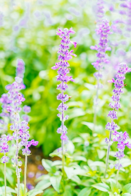 Fleur de lavande Photo gratuit