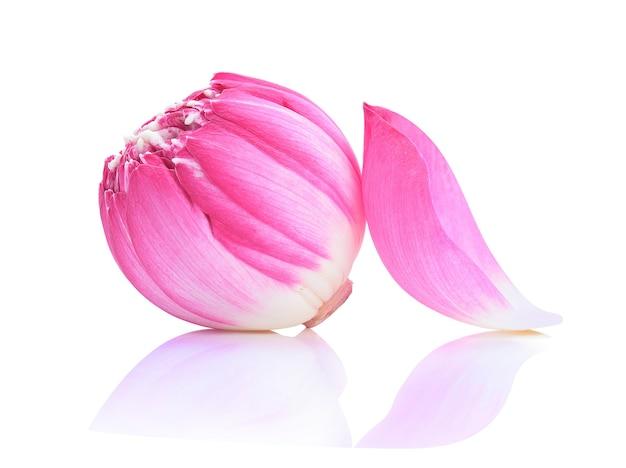 Fleur De Lotus Isolé Sur Blanc Photo Premium
