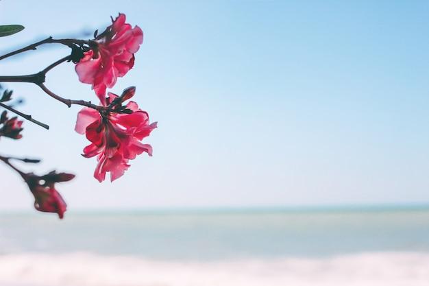 Fleur de magnolia rose sur la mer Photo Premium