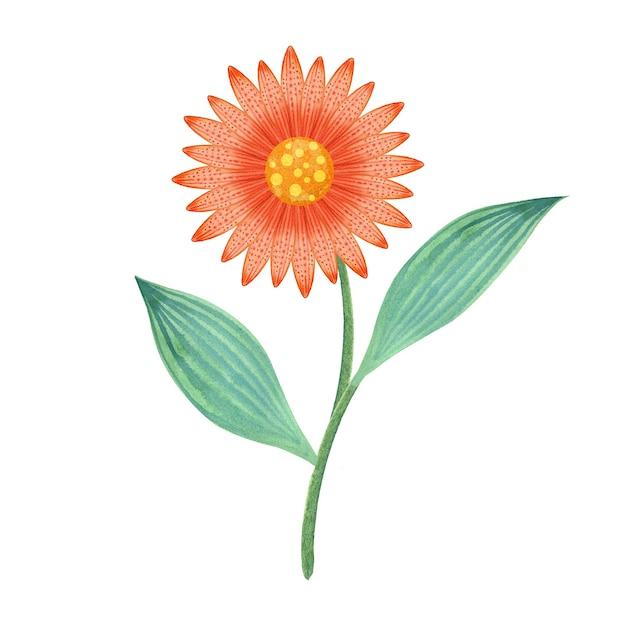 Fleur Orange Aquarelle Photo Premium
