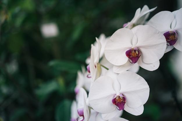 Fleur d'orchidée dans le jardin d'orchidées en hiver ou au printemps avec une feuille verte et de l'herbe Photo Premium