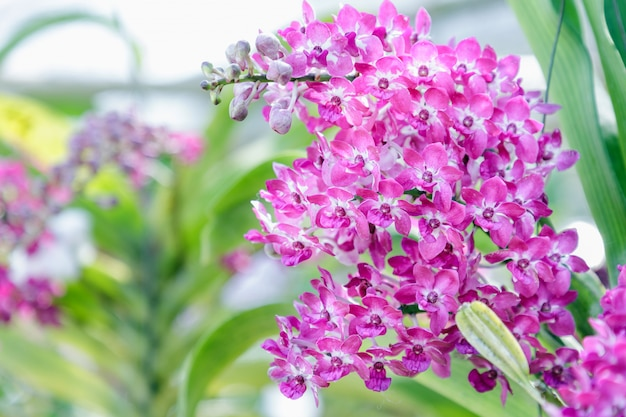Fleur d'orchidée dans le jardin d'orchidées en hiver ou au printemps pour une beauté de carte postale Photo Premium