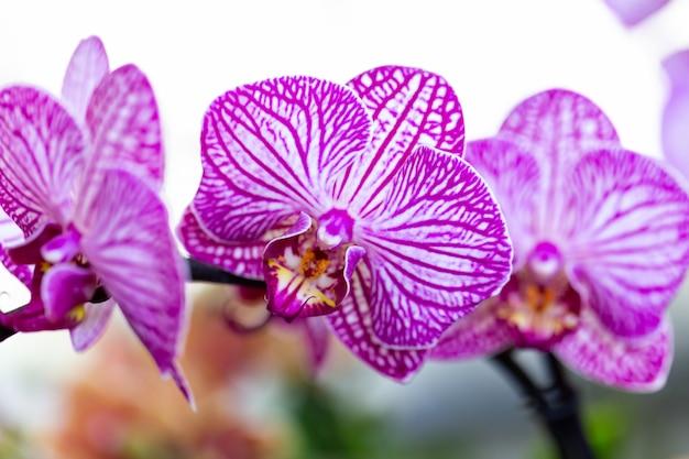 Fleur D'orchidée De Jardin Sélectionnée Pour La Décoration Photo Premium