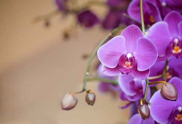 Fleur D'orchidée Phalaenopsis Photo gratuit