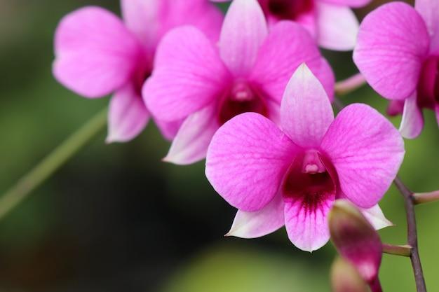 Fleur D Orchidee Rose Tropicale Telecharger Des Photos Premium