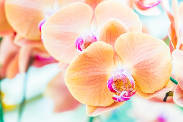 Fleur orchidée Photo gratuit