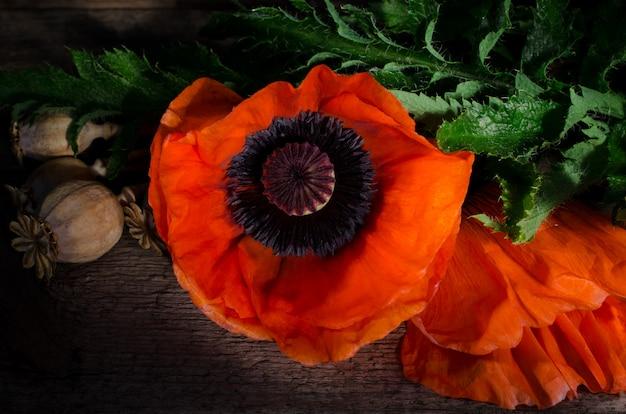 Fleur de pavot rouge sur un fond en bois foncé Photo Premium