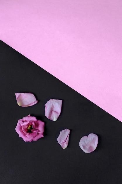 Fleur Avec Des Petales Sur Fond D Ecran Rose Et Noir