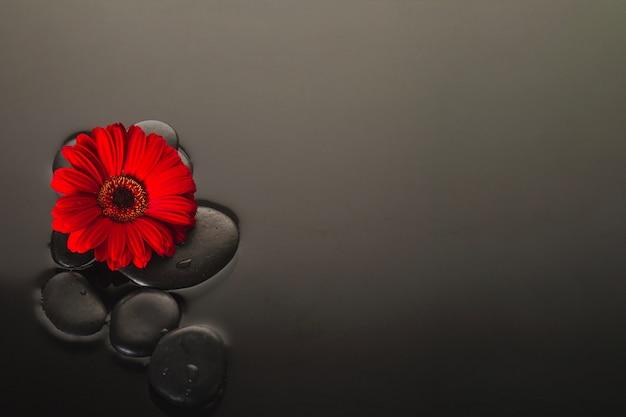 Fleur et pierres volcaniques Photo gratuit
