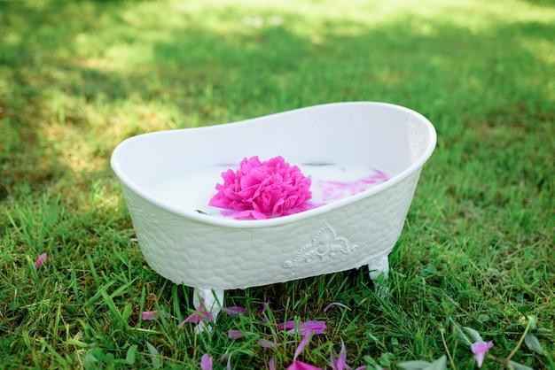 Fleur De Pivoine Avec Pétales Dans Un Bain De Lait. Photo Premium