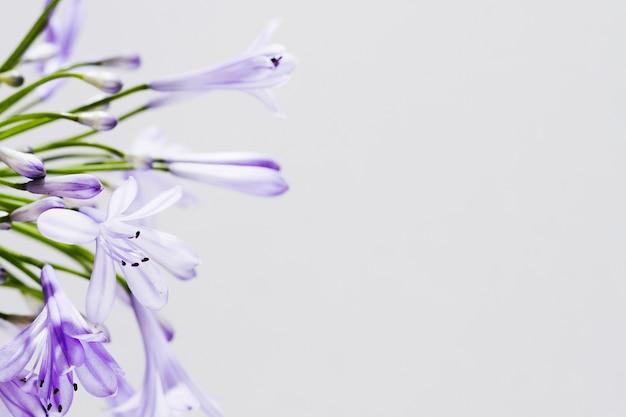 Fleur Pourpre Avec Espace De Copie Photo gratuit