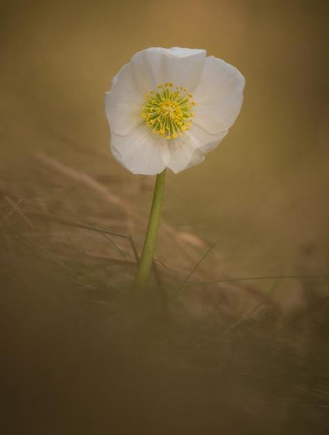 Fleur de printemps Photo Premium