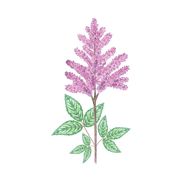 Fleur Rose Aquarelle Photo Premium