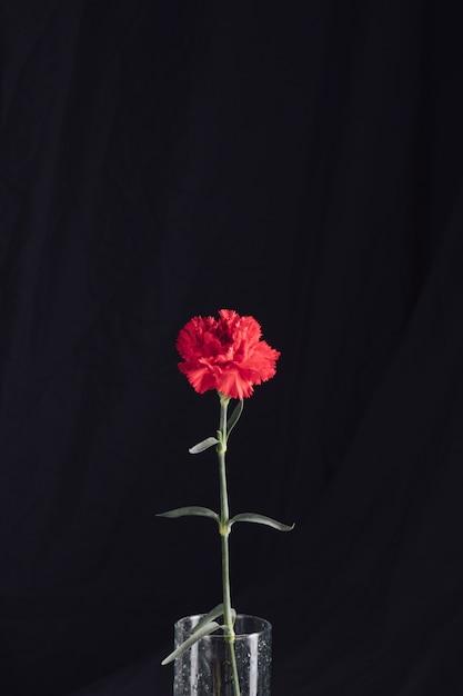 Fleur rouge fraîche dans un vase Photo gratuit