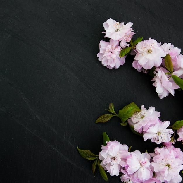 Fleur de sakura de printemps Photo Premium