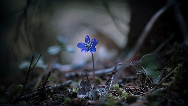 Fleur solo dans la forêt Photo Premium