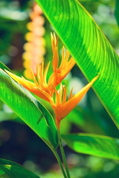 Fleur tropicale Photo Premium