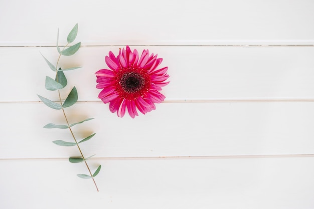 Fleur Unique Lumineuse Avec Une Brindille Verte Telecharger Des