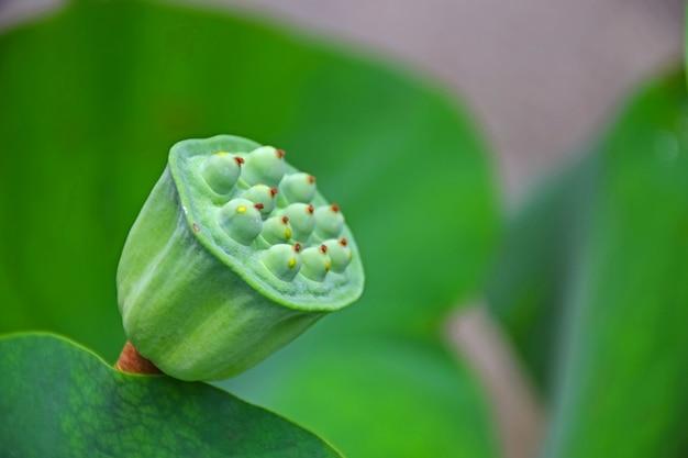 Fleur Verte Etrange Telecharger Des Photos Gratuitement