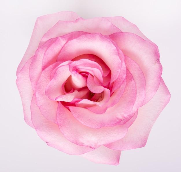 Fleur Photo gratuit