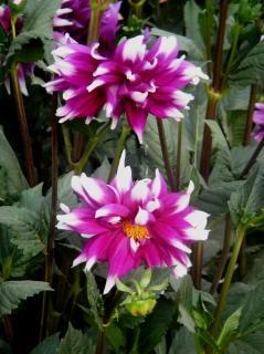Fleurs Anniversaire Photo Gratuite