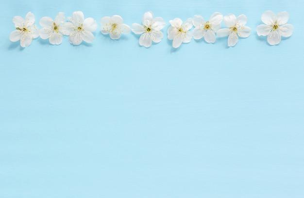 Fleurs d'arbres bordent sur fond bleu. floraison printanière Photo Premium