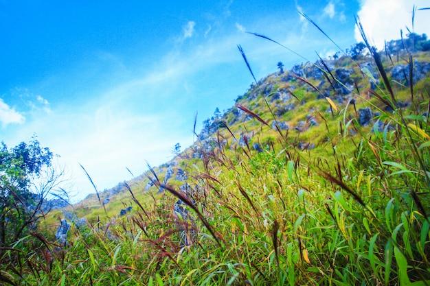 Fleurs de belle herbe paysage de montagne calcaire rocheuse et forêt verte Photo Premium