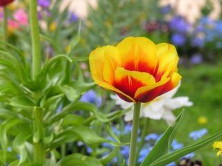 Fleurs à berlin Photo gratuit