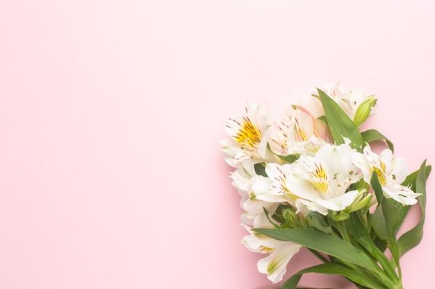 Fleurs Blanches Alstroemeria Sur Un Rose Photo Premium