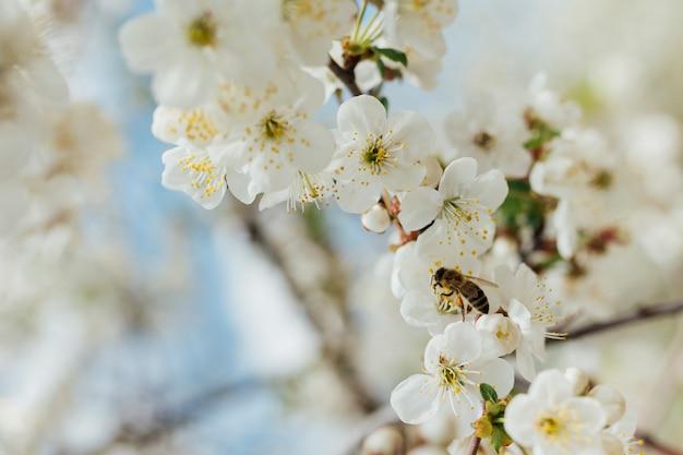Fleurs blanches sur une branche Photo gratuit